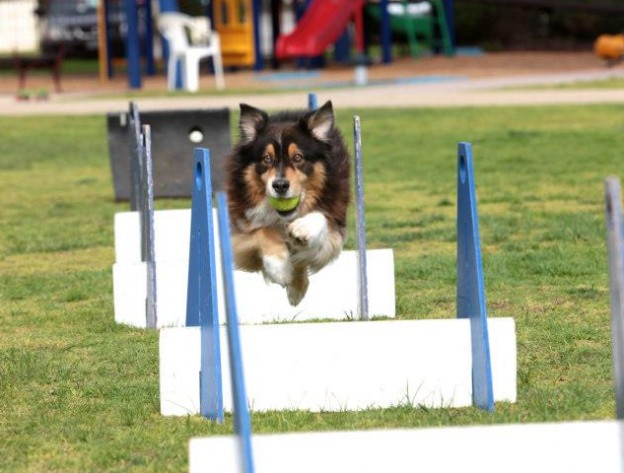 Flyball 2