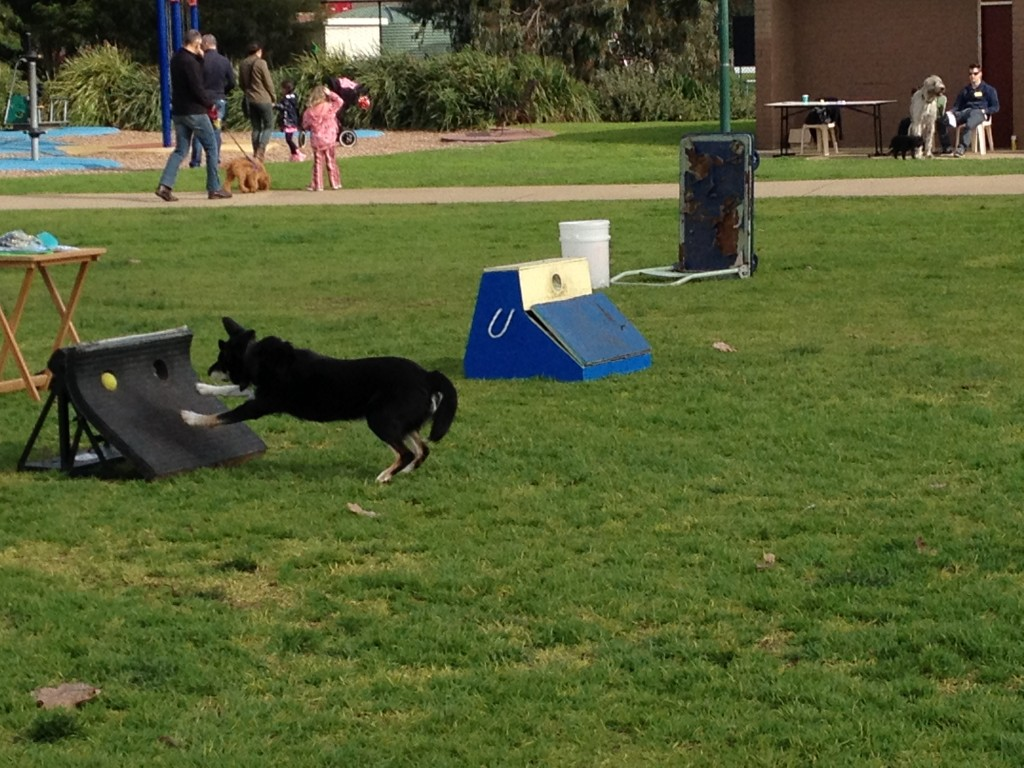 Fast flyball action